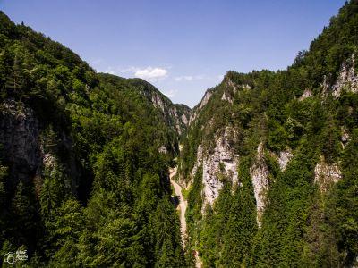 Les Gorges de Dambovicioara, Roumanie