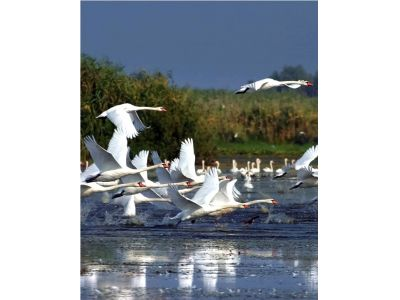 ESCAPADES - Travel in the Danube Delta