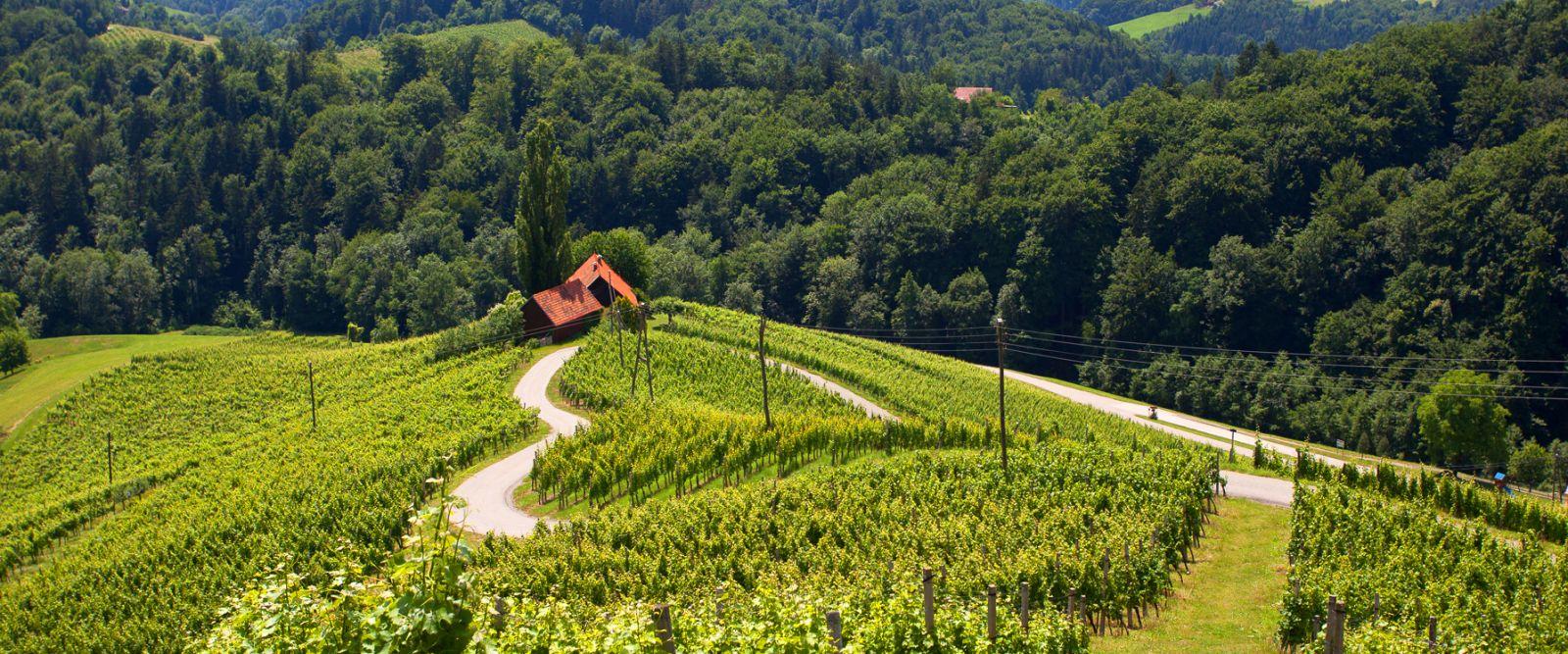 Slovénie vigne