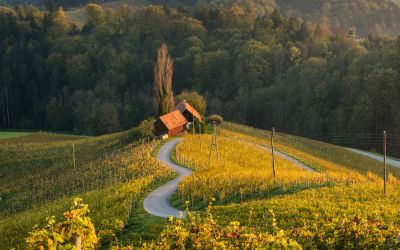 Culinary tasting in Slovenia - 6 days from 913 €